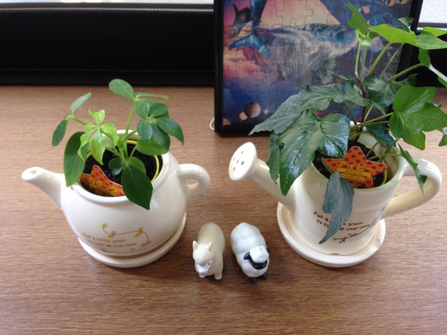 ティーポッドとジョウロに観葉植物