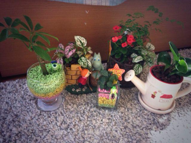 観葉植物とムーミンの人形を飾る