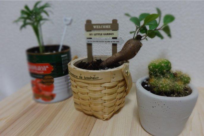 セリアの観葉植物をリメイク