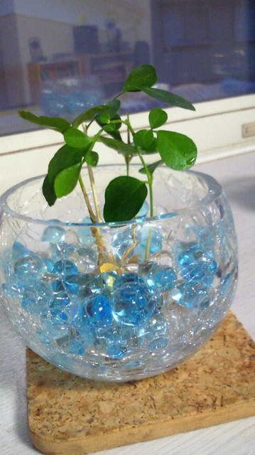 100均の観葉植物とジェルポリマー