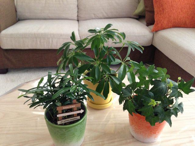 セリアの矢印看板をさした観葉植物