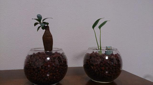 100均の観葉植物をおしゃれにリメイク