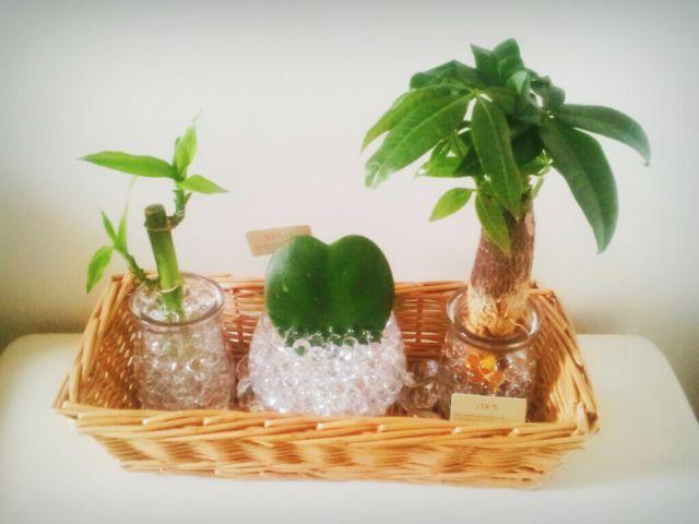 ナチュラルキッチンの観葉植物