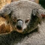 オーストラリア旅行の「おすすめ」や「イチ押し」口コミを集めてみた。