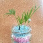 100均 カラーゼオライトで植物の植え替え